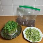 ミニパック ・業務用小分け ブロッコリー(スプラウト)のタネ 200ML花粉症対策にも! DM便なら全国送料無料!