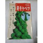 野菜苗 芽キャベツ