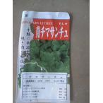 野菜苗 チマサンチュ チシャ 焼肉 韓国