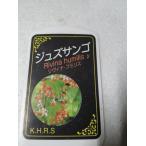 ジュズサンゴ 4号鉢 赤い実