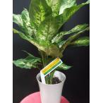 デヘンバキア スパークレス 観葉植物