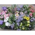 季節のお花でお庭を華やかにしませんか?