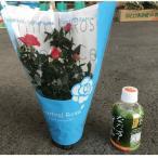 ★ミニ薔薇 (3.5寸)(1箱10鉢での販売です)ハーフセット