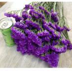 スターチス切り花(ブルー)2Lサイズ1箱100本入での販売です。