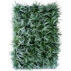 Yahoo!緑の風yamashoku ヤフー店ガーデン苗セット販売 竜のヒゲ 10ポットセット(2.5〜3号)【お得なまとめ買い】