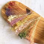 【プリザーブドフラワー】モリソニア 8色アソート 4g ハーバリウム レジン 髪飾り 花材 アレンジ キット