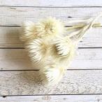 【プリザーブドフラワー】ミニシルバーデイジー ホワイト 5輪 大地農園 ハーバリウム レジン 髪飾り 花材 アレンジ キット
