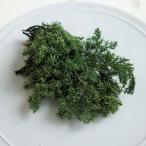 【プリザーブドフラワー】ソフトヒムロスギ フォレストグリーン 5g  ハーバリウム レジン 髪飾り 花材 リース キット
