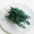 【プリザーブドフラワー】ソフトヒムロスギ グリーン 5g  ハーバリウム レジン 髪飾り 花材 リース キット