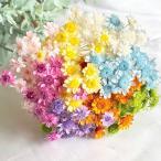 【ドライフラワー】スターフラワー ブロッサム 小分け20本  大地農園 ハーバリウム 髪飾り小花