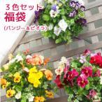 寄せ植え/苗/セット/ギフト/花/鉢植え/ハンギング/おしゃれ