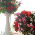 ●立体花壇を作ろう(^o^)丿●「スリットプランター」 (寄せ植え 春 鉢 ガーデングッズ 寄せ植え)