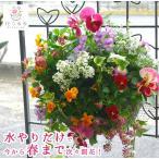寄せ植え/苗/セット/ギフト/花/ハンギングバスケット/おしゃれ