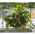 ビオラのハンギングバスケット寄せ植え「yellow&yellow」(Mサイズアレンジ)(ハンギング/寄せ植え/秋/冬/セット/ギフト/花/フラワー/誕生日プレゼント