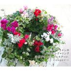 送料無料 ガーデンシクラメンのハンギングリース寄せ植え・花うるるアレンジ「Ring〜エレガント」(寄せ植え/秋/冬/玄関/リース/誕生日/おしゃれ/結婚祝い