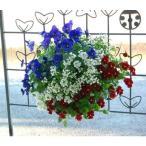ビオラのハンギングバスケット寄せ植え「GALAXY〜ブルー&レッド」(シンプル)(ハンギング/寄せ植え/秋/冬/セット/ギフト/花/フラワー/誕生日プレゼント