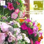 「ハンギングバスケット定期便〜ゴールド」 12ヶ月コース