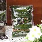 1リットル 多肉植物の植え込みに最適 培養土の代わりに使える『最高級ヤシの実チップ〜ベラボン サキュレント』(ゴールド)給水 保水性も抜群
