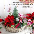 クリスマスの 寄せ植え かごタイプ「Ship Xmas 2017」(真冬は室内で)(クリスマス/寄せ植え/ガーデニング/苗/冬/ギフト/飾り/鉢/プランター)