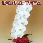 季節に関係なく年中北海道への配送が可能。※離島はお届け不可。