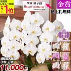 胡蝶蘭 ギフト お祝い 送料無料 開店祝い 花 鉢花