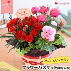 母の日 花 ギフト 2017 早割 送料無料 カーネーション、ミニバラなど人気の花鉢がぎゅっ!ふわふわプードルが笑顔をお届け 寄せ鉢 母の日限定