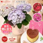 母の日 ギフト 花 プレゼント 早割 2021 アジサイ 選べる3種類 大栄花園さんのアジサイ4号鉢と長崎カステラセット 数量限定 新品種 あじさい 鉢植え 紫陽花