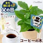 あすつく対応 ギフト 送料無料 コーヒータイム コーヒーの木 観葉植物&徳島ブラジルコーヒーさんのドリップコーヒーのセット コーヒーギフト