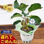 父の日 ギフト プレゼント 選べる2種類の果樹 果物 5号鉢 キウイ か レモン(実付き)の鉢植え〜バスケット付き 観葉植物