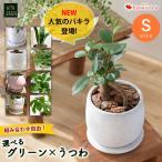 観葉植物 おしゃれ 育てやすい 自由に選ぶグリーン&うつわ 選べる16通り インテリア ギフト ガジュマル サンスベリア シェフレラ