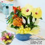 鉢植え 花 ギフト 誕生日 母 女性 祖母 退職祝い 贈り物 フラワーバスケット 季節のおまかせ花鉢とグリーンの寄せ入れ Mサイズ 画像配信サービス あすつく対応