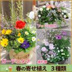 大人気シリーズ  選べる3種 プロが植える春の寄せ植え  送料無料  お誕生日 プレゼント 女性 母 祖母 法人ギフト 開店祝い 花 お祝い フラワーギフト