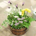 寄せ植え 花 ギフト 玄関 誕生日 プレゼント 開店祝い お花 新築祝い 引っ越し祝い 季節のおまかせ<Mサイズ>〜今一番新鮮できれいなお花をたっぷり寄せ植え