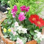 花鉢 寄せ植え 春まで楽しめる寄せ植え ガーデニング〜カントリーガーデン 11/6から12/25の間で配達日指定OK
