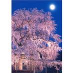 【東急ハンズ】ピンナップ ポストカード 京都 円山公園 しだれ桜 月 KM14