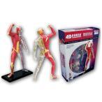ショッピングパズル 【ポイント10倍】【東急ハンズ】アオシマ 人体解剖モデル 筋肉と骨格
