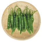 【野菜】青唐辛子 200g〔クール便〕