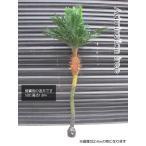 ヤシの木 180cm リアル造木 パームツリー 観葉植物 南国 やしの木