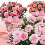 母の日 花 母の日ギフト カーネーション 鉢植え 5号1鉢 ラッピング&カード付き 母の日のプレゼント