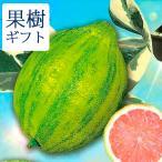 父の日ギフト 果樹 果物 斑入り葉 しま模様 レモンの木 ピンクレモネード5号1鉢