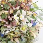 花苗 カラーリーフ クリスマスローズ 選べる9種 3.5g号 Helleborus × hybridus クリスマス ローズ カラーリーフ 苗