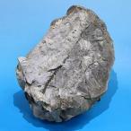 北海道産アンモナイト(ユーボストリコセラス) ノジュール  Eubostrychoceras 天然石 化石