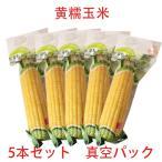 黄糯玉米(1本入) 【5本セット】黄もちとうもろこし真空パック  調理済み 温めるだけ  即席トウモロコシ250g×5