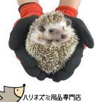 ショッピング用品 ゆうパケットOK◆ハリネズミ用品専門店◆はりねずみを持っても痛くない!厚手コーティング手袋