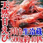 山形県産 天然子持ち 甘エビ 500g 40匹 生冷蔵 刺身 業務用 甘えび 甘海老 鮮魚 海鮮丼 刺し身 盛り合わせ セット