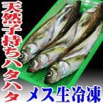 子持ちハタハタ 1.2�1.5kg15尾 生冷凍 山形県産 天然 旬 ブリ子 鮮魚 はたはた 鰰