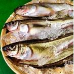 子持ち ハタハタ 500g 5尾 特大 生冷凍 山形県産 天然 旬 ブリ子 鮮魚 はたはた 鰰