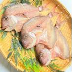 鯛 干物 3枚セット 山形県産 冷凍 無添加 天然真鯛 一夜干し お祝い お食い初め 日本海