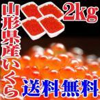 山形県産 いくら 醤油漬け 送料無料 2kg(500g×4) 冷凍 無添加 筋子 鮭のはらこ 日本海 鮮魚 海鮮丼 いくら丼