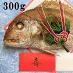 祝い 鯛 お食い初め 節句 山形県産 天然 真鯛 1尾300g前後 冷蔵 敷き紙とお飾り無料 塩焼き 焼き鯛